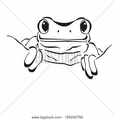 Frog in flat style isolated on white background. Frog icon for web design
