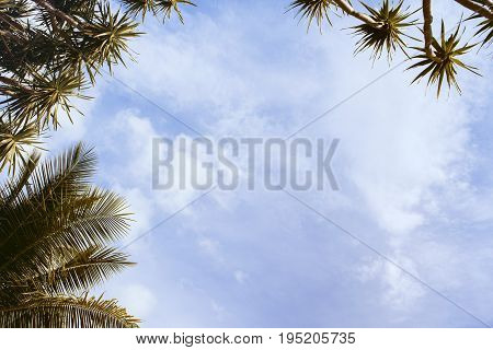 Coco palm leaf on sky background. Tropical island vintage toned photo. Summer holiday banner template. Fluffy palm tree crown with green leaf. Coconut palms under sunlight. Exotic nature relaxing view