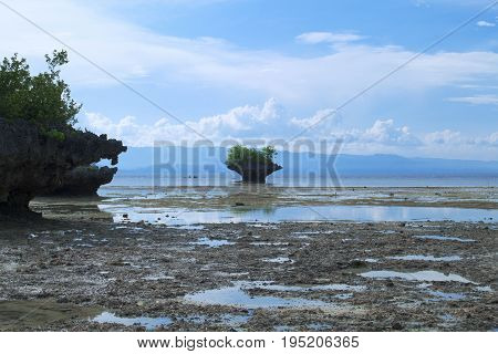 Seashore mountain with forest during low tide. Small cliff with trees in sea water. Shore mountain. Seaside landscape. Volcanic beach panorama. Tropical island nature. Summer vacation in Philippines