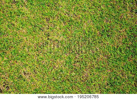 Short grass background Green grass soccer field background Close-up image of fresh spring green grass. Grass image for backdrop or seasonal card. Green land texture. Playground area for football