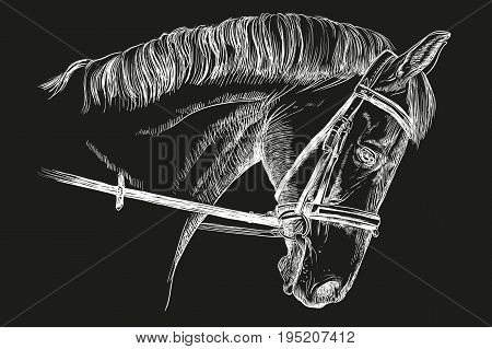 Isolated horse head with bridle in white color vector hand drawing illustration on black background