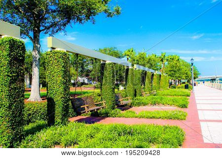 Shoreside bench swings with vines crawling up pillars