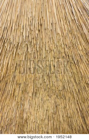 Reed Thatch