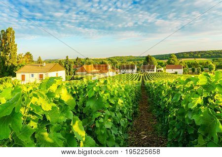 Village countryside and champagne vineyards at montagne de reims France
