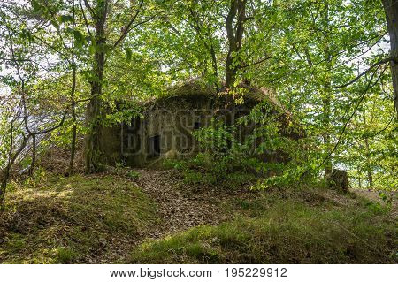 Military Bunker In Forest From World War Ii