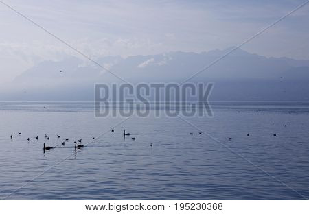 Landscape view on Geneva lake with beautiful mountains in France and view from Lausanne city in Switzerland