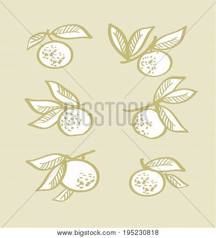orange hand drawn element. tangerine citrus vector illustration
