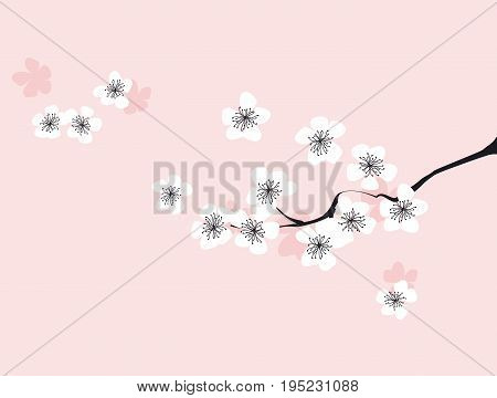 Branch of white blossoming sakura. Japanese cherry tree. Vector Isolated Illustration on rosy background