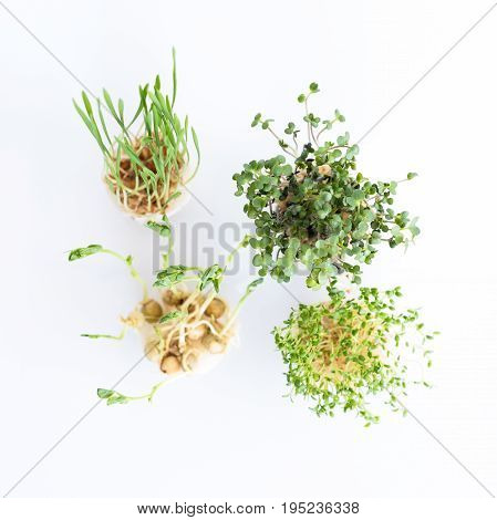 Growing microgreens on white background. Healthy eating concept of fresh garden produce organically grown as a symbol of health. Top view