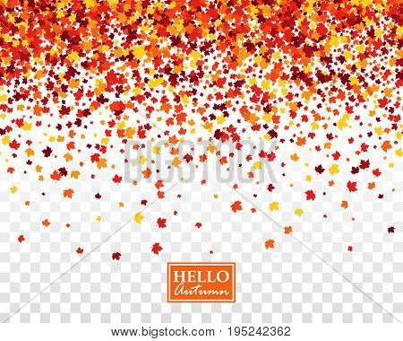 Fall festive seamless background with scattered maple leaves in traditional Autumn colors - orange yellow red brown. Isolated vector pattern