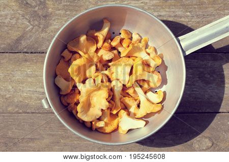 A bunch of freshly picked and washed orange mushrooms on the table top view / appetizing chanterelles for delicacy dish