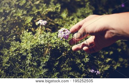 Hand Reaching Out for Purple Flowers