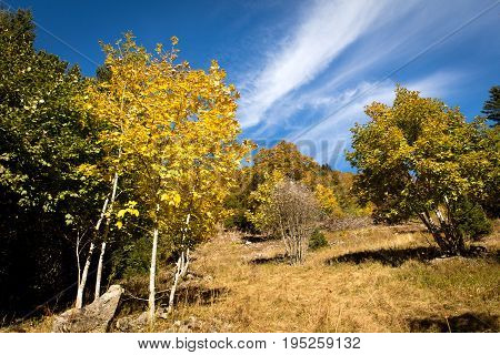 Black Forest Landscape, Rocky Hill With Colorful Trees