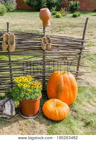 Pumpkins At Wicker Fence