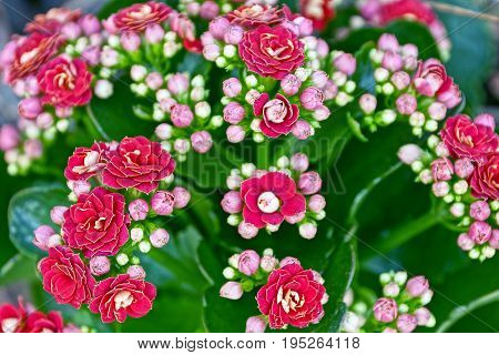 Bouquet of flowers with small red flowers