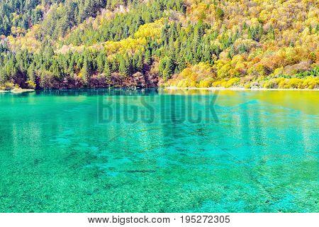 Five Flower Lake at autumn sunrise time. Jiuzhaigou nature reserve Jiuzhai Valley National Park China.