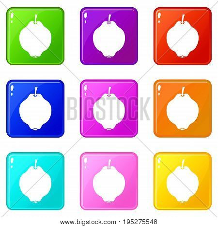 Quince fruit icons of 9 color set isolated vector illustration