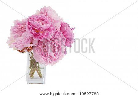 vase of pink peony flowers isolated on white background