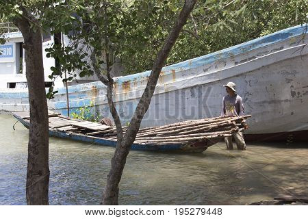 Unidentified Vietnamese Collecting Wood