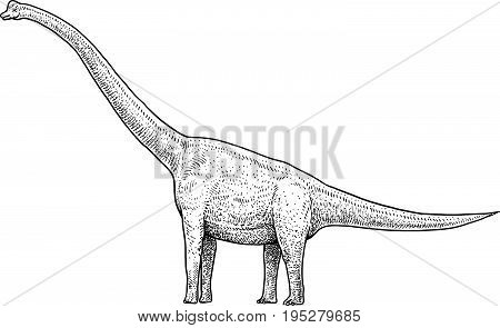 Brachiosaurus illustration, drawing, engraving, ink, line art