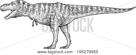Tyrannosaurus illustration, drawing, engraving, ink, line art