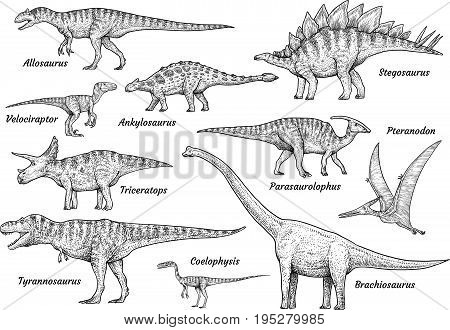Dinosaur collection, illustration, drawing, engraving, ink, line art