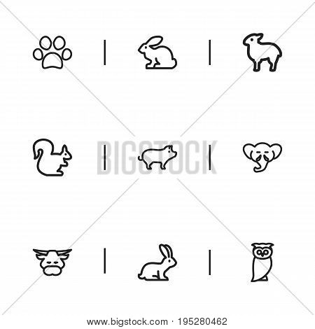 Set Of 9 Editable Zoology Icons. Includes Symbols Such As Pig, Rabbit, Dog Steps And More. Can Be Used For Web, Mobile, UI And Infographic Design.