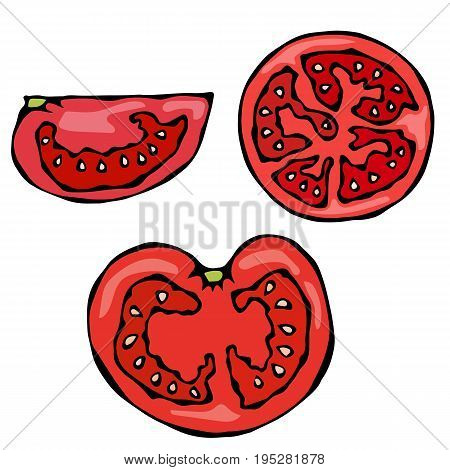 Piece or Slice of Red Fresh Ripe Tomato. Realistic and Doodle Style Hand Drawn Sketch Vector Illustration. Isolated On a White Background.