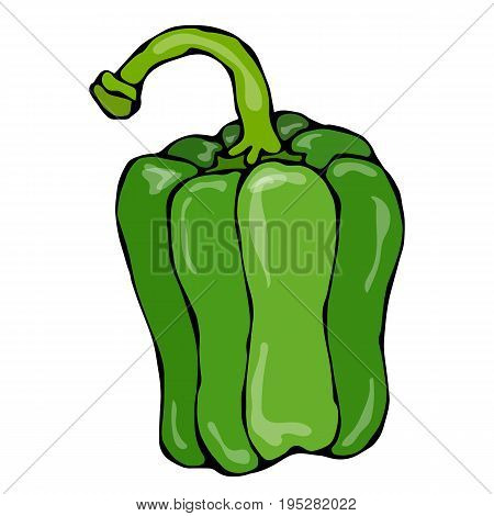 Whole Green Paprika, Bell Pepper or Sweet Bulgarian Pepper . Realistic and Doodle Style Hand Drawn Sketch Vector Illustration.Isolated On a White Background.