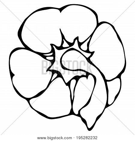 Paprika, Bell Pepper or Sweet Bulgarian Pepper Top View. Realistic and Doodle Style Hand Drawn Sketch Vector Illustration.Isolated On a White Background.