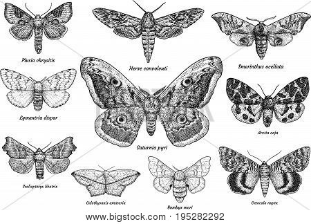 Set of moths and butterflies illustration, drawing, engraving, ink, line art