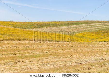 Farm Plantation In Vale Seco, Santiago Do Cacem