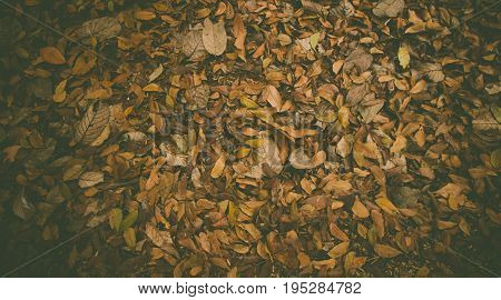 Top view of dead leaf texture background