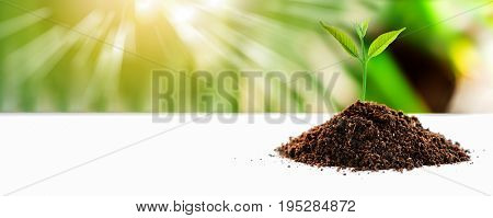 small plant on soil put on wooden table with sunlight nature blurred background