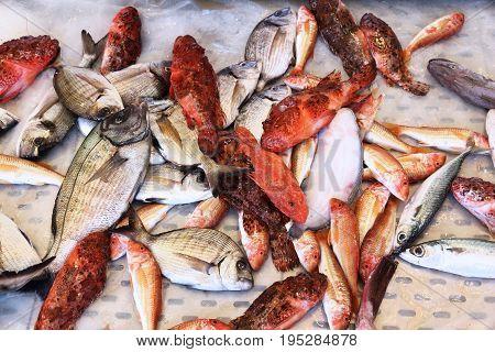 Italy Fish Market