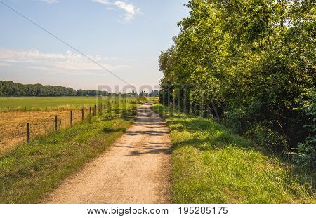 Winding dirt road between trees and grassland with a fence made of wooden poles with wire mesh. It is a sunny day in the Dutch summer season.
