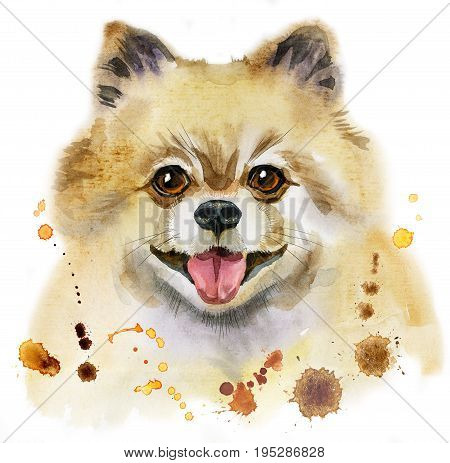 Cute Dog. Dog T-shirt graphics. watercolor pomeranian spitz illustration