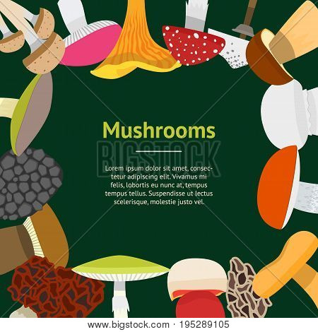 Cartoon Mushrooms Banner Card Circle on a Green Flat Design Style Edible and Poisonous Nature Food. Vector illustration