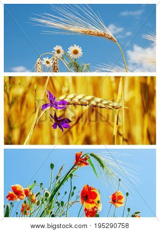 set of pictures with flowers and crops in field