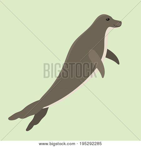 Hawaiian monk seal swimming animal hawaii mammal endangered species marine nature beach aquatic lion coast character vector illustration. Cartoon underwater chuco habitat.