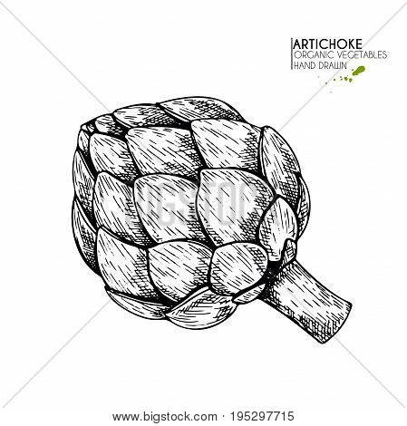 Vector hand drawn set of farm vegetables. Isolated artichoke. Engraved art. Organic sketched vegetarian objects. Use for restaurant, menu, grocery, market, store, party, meal