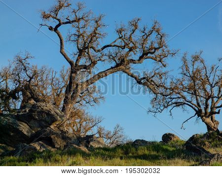 Bare trees along California highway on a clear bright day