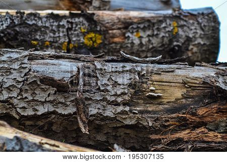 An old wooden log for a fire or a stove