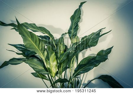 Beautiful Exotic plants background with green leaves