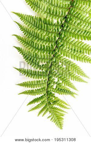 Exotic plants fern leaf background on white