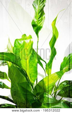 Beautiful white background with exotic green leaves
