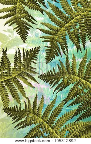 Beautiful Exotic plants Fern background with leaves
