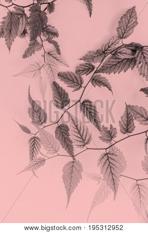 Young leaves artistic background in soft colors