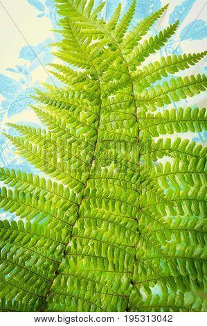 Beautiful Exotic plants Fern green leaf background