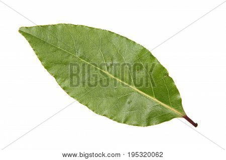 Bay leaf cut out and isolated on a white background